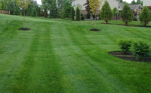How Much Does Lawn Care Cost In Nky Find Out Here
